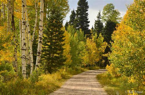 fall colors colorado colorado fall foliage report kit