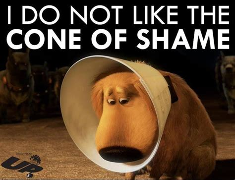 cone of shame 76 best images about quotes on rainbow bridge pets and puppys