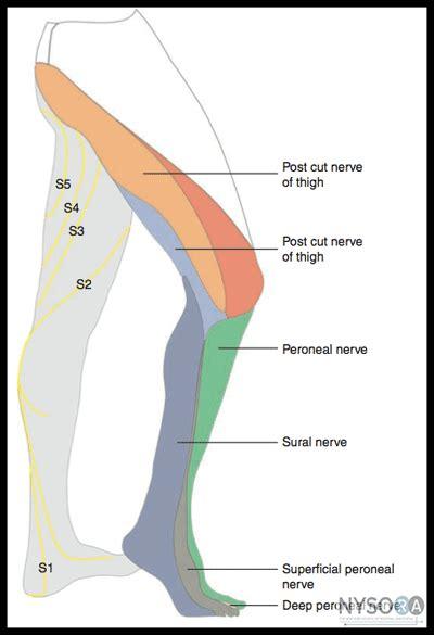 sciatic nerve location diagram sciatic nerve block transgluteal anterior approach