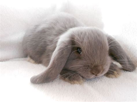 7 Tips On Caring For Baby Bunnies by Best 20 Bunnies Ideas On Baby Bunnies
