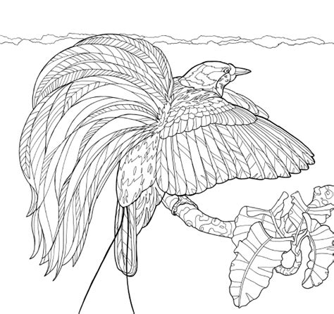 coloring pages bird of paradise bird of paradise flower drawing sketch coloring page