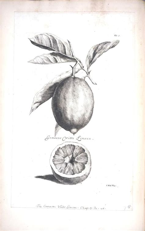 libro botanical drawing using graphite 52 best graphite botanical illustration images on pencil drawings graphite drawings