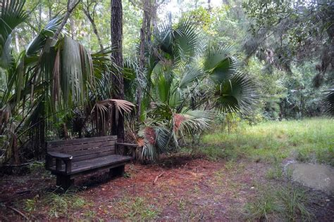 blue bench trails black bear wilderness loop trail florida hikes