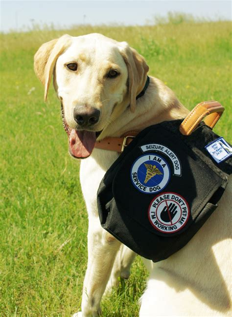 puppy seizures service dogs for america emergency response dogs