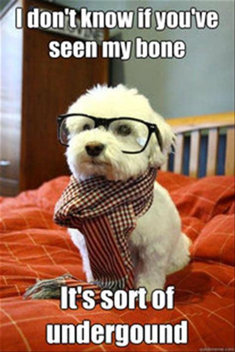 Doggy Meme - doggy meme dump a day