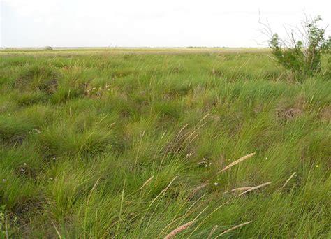 what is a prairie prairie watershed