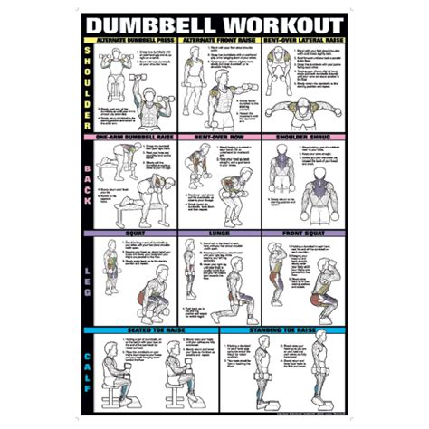 dumbbell exercises diagrams chart series ii dumbell exercises shoulder back leg