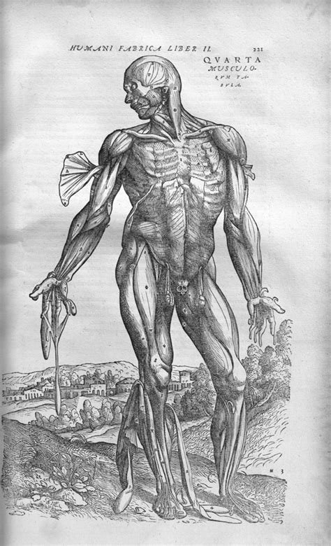 Fantastic William Harvey Anatomy Ornament - Anatomy And Physiology ...