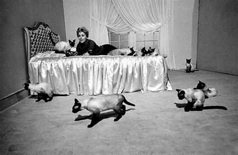 kim novak cat the world of old photography eliot elisofon actress kim