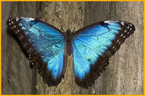 la casa delle farfalle catania la casa delle farfalle universit 224 di catania