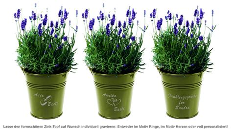 Lavendel Pflege Im Topf 4883 by Lavendel Im Zink Topf Mediterranes Flair Zum Verschenken