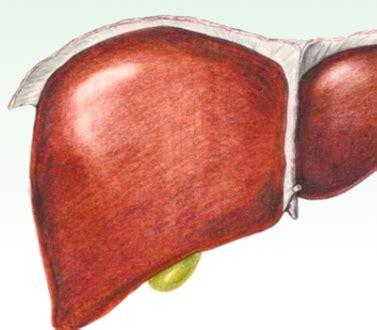 alimentazione corretta per il fegato disintossicare il fegato dieta consigli e rimedi