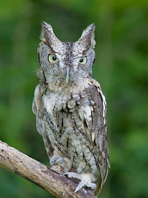 identify owls of iowa