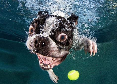 underwater dogs  swimming pools slapped ham