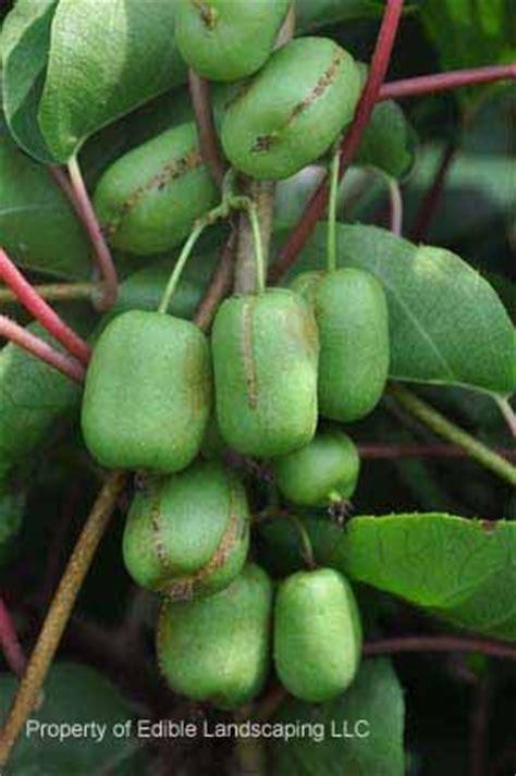 fruit zone 5 pin by lynda lisker on fruit trees and veggies