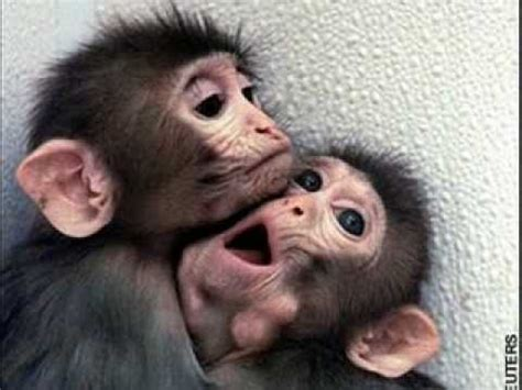 Cute Baby Monkeys!!!!   YouTube