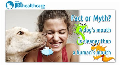 do dogs cleaner mouths than humans fact or myth a s is cleaner than a human s pethealthcare co zafact