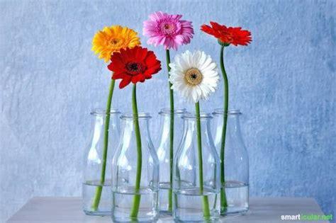 Blumen Die Lange Halten by 11 Tipps Mit Denen Blumen Besonders Lange Halten