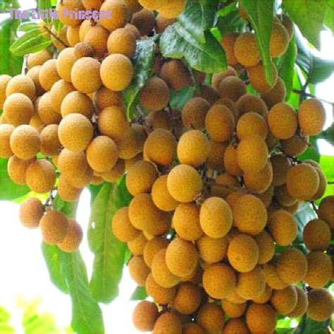 fruit tree seeds for sale buy wholesale tropical fruit tree from china