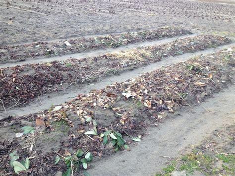 giardino sinergico progetto ecologico orticoltura e allevamento live sett 47
