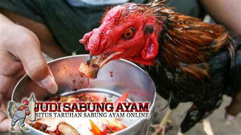 Vitamin Alami Buat Ayam Petelur suplemen ayam bangkok berkualitas dari bahan tradisional