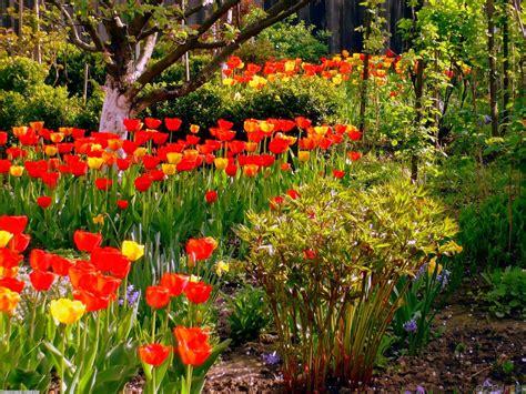 spring gardening jardines pinterest