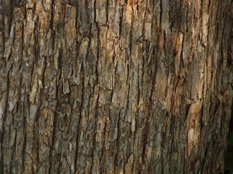 bark texture free stock photo public domain pictures