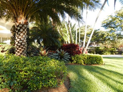 tropical landscape designs