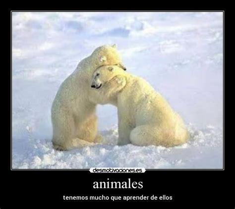 imagenes animales abrazados im 225 genes y carteles de abrazandose desmotivaciones