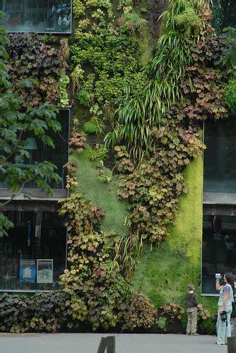 Green Wall Vertical Garden by Green Wall In Green Wall Green Walls