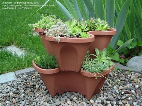 Plastic Strawberry Planter by Specialty Gardening Plastic Strawberry Pots 1 By