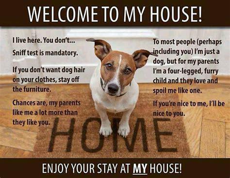 dog house jokes doggy jokes stonehouse dog training club