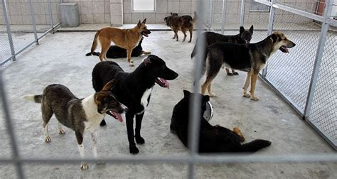 shelters for dogs top 5 myths about shelter dogs cesar s way