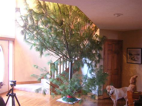 ugly and bizarre christmas trees gallery ebaum s world