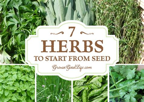 how to grow herbs growing herbs 7 herbs to start from seed