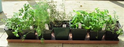 Herbs Windowsill by Growing Herbs Indoors The Farmer S Almanac