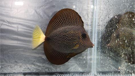 D Island 001 Black 02 mauritius south africa pacific island aquatics