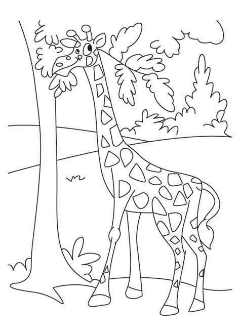 giraffe coloring pages pdf giraffe enjoying leaves coloring pages download free