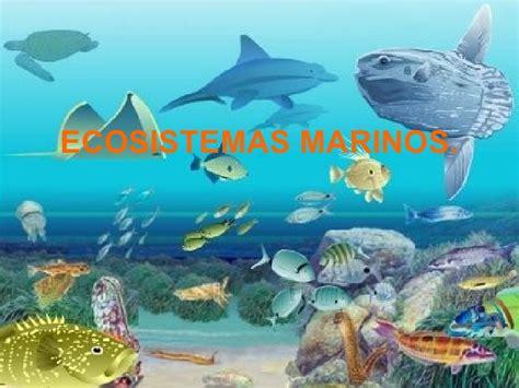 los animales marinos marine ecosistema marino