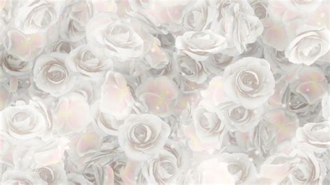 Wedding Background White by Roses White Wedding Background By Minimultik Videohive