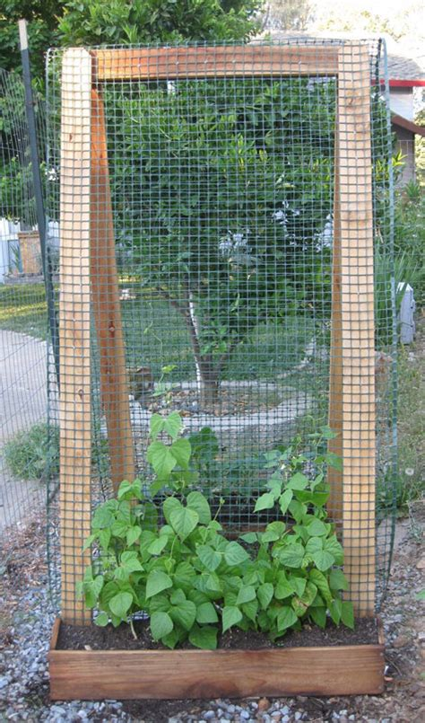 diy trellis plans vertical gardening ideas bonnie plants