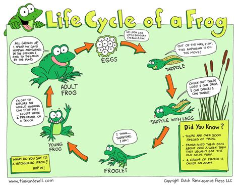life cycle of a frog tim van de vall