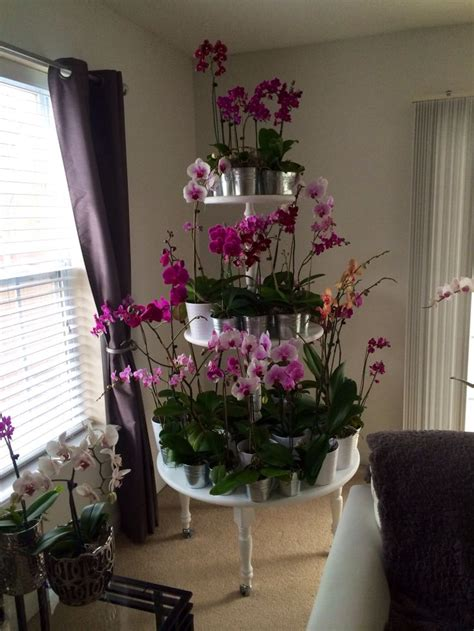 Orchid Planter Ideas by Orchid Plant Stand What A Wonderful Idea Orchids