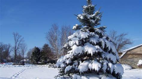 christbaum selber schlagen badisch weihnachtsbaum selber schlagen wann wie wo