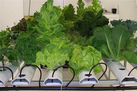 best indoor garden system best 1st indoor garden tips