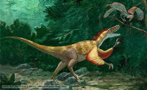 what does velociraptor eat it velociraptor vs compsognathus dinosaurs forum