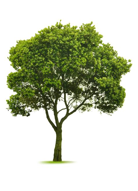 pictures of trees sustainability