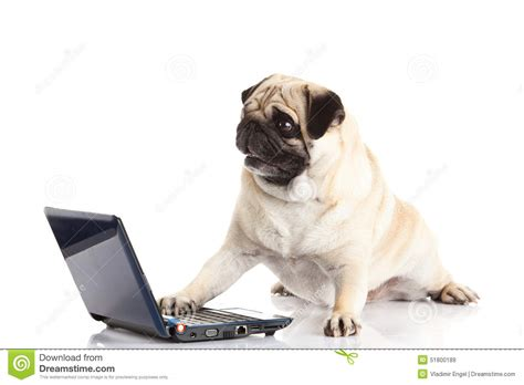 pug virus computer isolated on white background stock photo cartoondealer 62417742