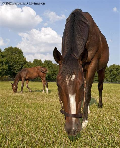 stonestreet rachel alexandra will not be bred in 2014 rachel alexandra and foal taco 6 20 12 rachel alexandra