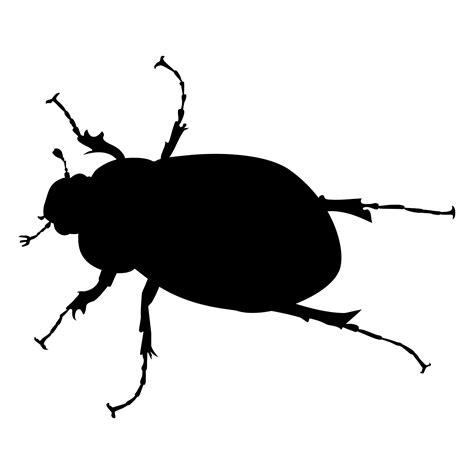 june bug  stock photo public domain pictures